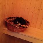 Pünktchen in der Sauna - natürlich nicht im Betrieb