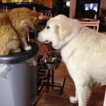Garfield und Flocke