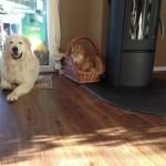 Garfield und Flocke entspannt